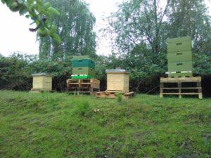 Bienen bei BeoPlast: 100.000 neue Mitarbeiter.