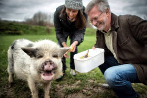 "Domestic pig ""Piggy"" ranks as biowaste bin"