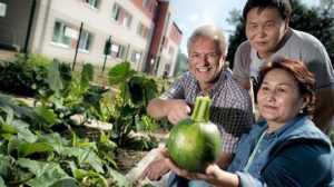 Flüchtlinge ernten Gemüse vom eigenen Beet